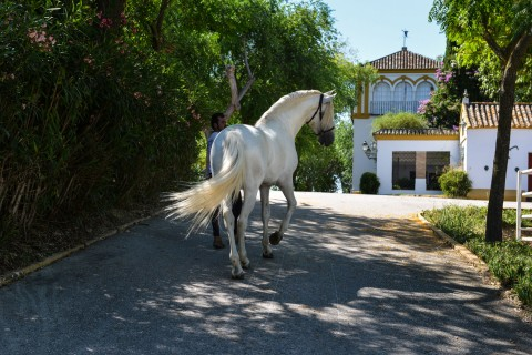haciendas for sale in Andalusia