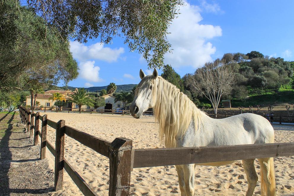 Hacienda Cadiz, equestrian facilities
