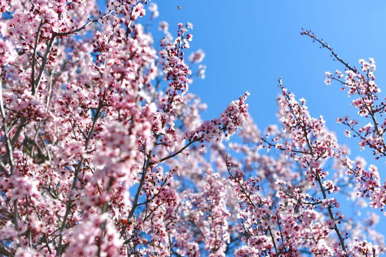 Hello Spring Casares