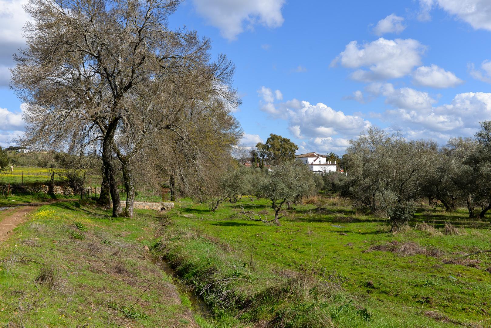 Cortijo con olivar Sevilla