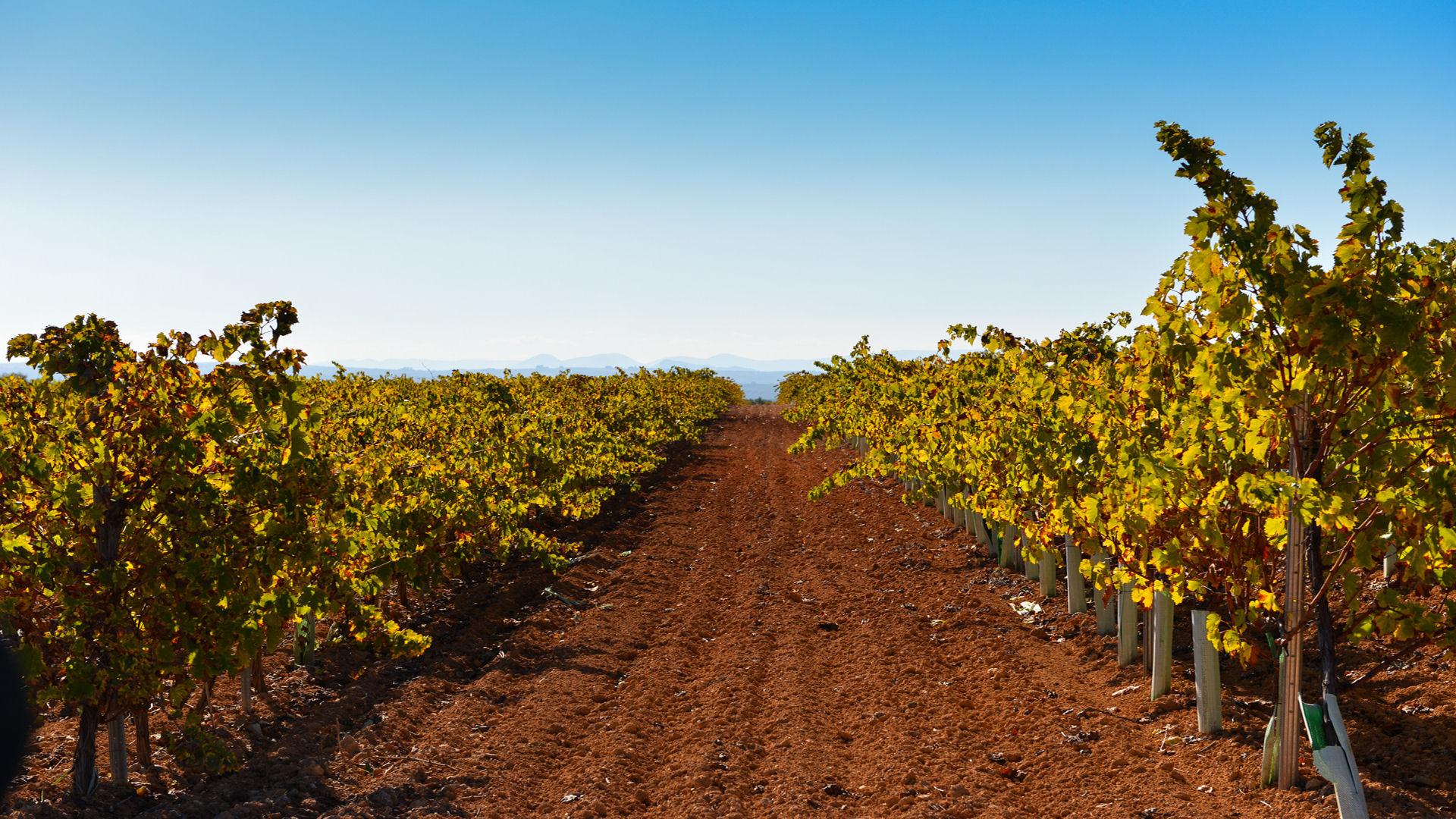 cortijo with vineyard in cordoba