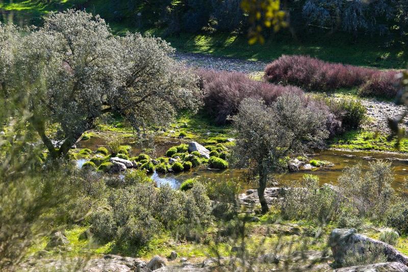 Naturaleza en Sevilla