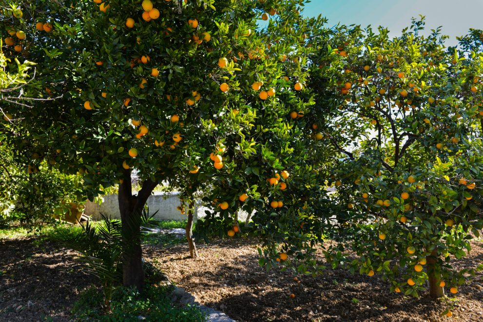 Oranges summer in Andalusia