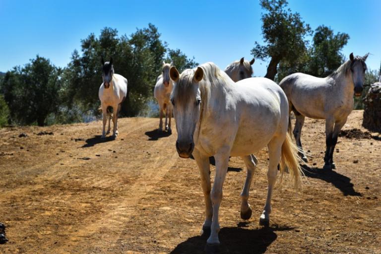 Cordoba Equestrian Estate