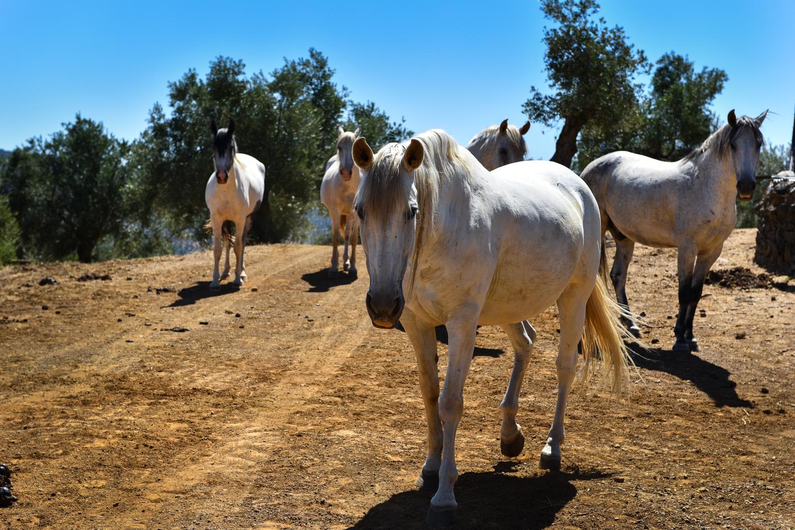 Lifestyle Equestrian