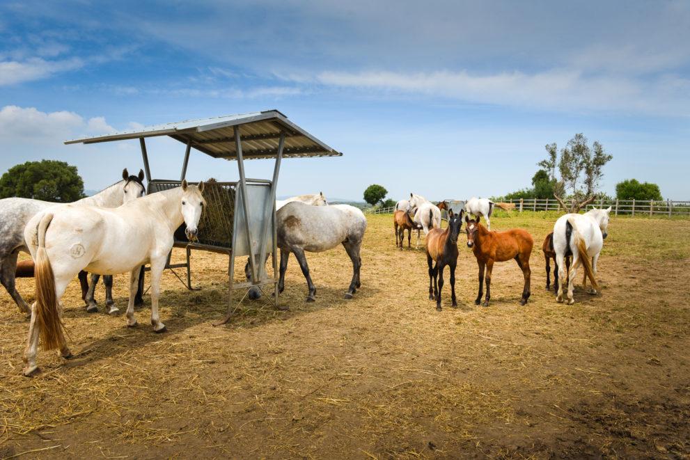 Property Equestrian