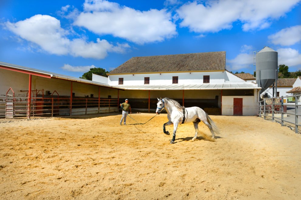 Life Spain Equestrian