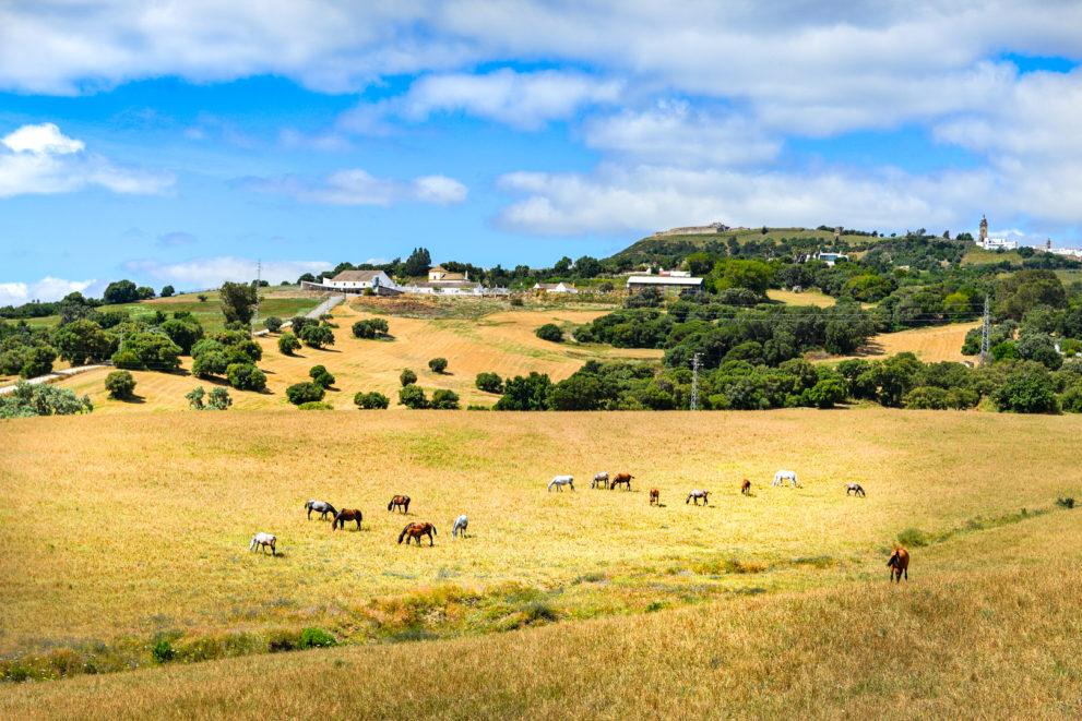 Estate Equestrian